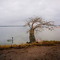A man punts a boat past a baobab tree that stands at the 'point of no return' on Morro da Cruz (Cross Hill), near Luanda. This was the place where slaves were loaded onto the ships that transported them to the New World.