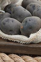 Black Potatoes 'Swedish Black' Solanum with dark skins