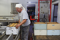 Frank Malfroy in the honey house. This descendent of a French family from the Jura is harvesting the honey chambers.///Dans la miellerie, Franck Malfroy. Ce descendant d'une famille française du Jura récolte les hausses de miel.
