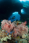 """A diver approaches a gorgonian through """"Boo Windows"""" Southern Raja Ampat, West Papua, Indonesia"""
