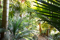Morning light through palm tree foliage in Don Worth garden, California