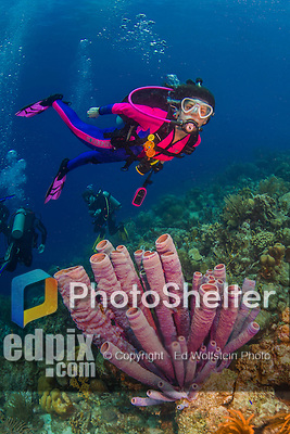 26 January 2016:  SCUBA Diver Sally Herschorn swims over a cluster of Purple Tube Sponges (Aplysina lacunosa) at Monk's Haven Reef on Klein Bonaire. Klein Bonaire (Small Bonaire) is an uninhabited island off the west coast of Bonaire in the Dutch Caribbean. Bonaire is known for its pioneering role in the preservation of the marine environment. A part of the Netherland Caribbean Islands, Bonaire is located off the coast of Venezuela and offers excellent scuba diving, snorkeling and windsurfing.  Mandatory Credit: Ed Wolfstein Photo *** RAW (NEF) Image File Available ***