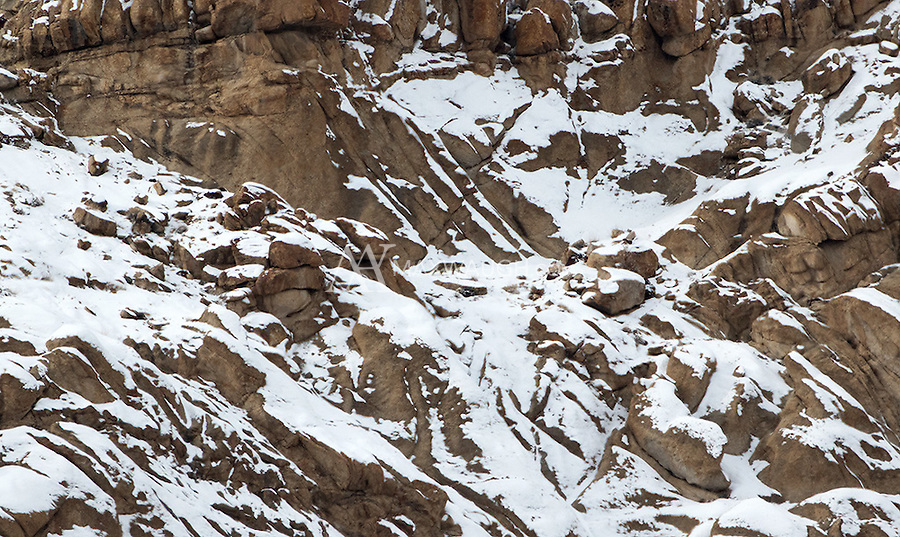 Can you spot the snow leopard in this picture?  This was my best view, of three different snow leopards I saw during my trip.  The photo was taken at a full 2 kilometers away!<br />