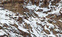 Can you spot the snow leopard in this picture?  This was my best view, of three different snow leopards I saw during my trip.  The photo was taken at a full 2 kilometers away!<br /> <br /> (It's in the center of the picture in the snow.)
