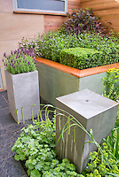 Raised beds and container garden in corner of house wall, creative unusual foundation plantings, Spanish lavender Lavandula stoechas herbs, perennial flowers of Alchemilla mollis lady's mantle, shrub boxwoods Buxus, etc.