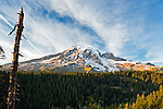Mount Rainier National Park Photos/Pictures