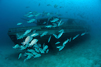 Snappers and other fish often congregate around wrecks which provide them with shelter from predators. The island of Kapalai is a mecca for divers and famous for its unusual biodiversity. The island of Sipadan is close by.