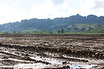 Rice Field, Los Haitises
