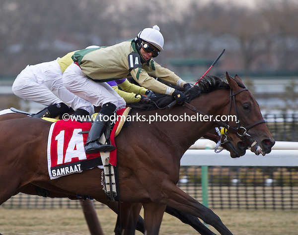 Gotham, Top Flight, and Tom Fool Stakes - 03/01/2014