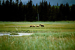 AK: Lake Clark National Park, Alaska, bear viewing,.Photo Copyright: Lee Foster, lee@fostertravel.com, www.fostertravel.com, (510) 549-2202.Image: akbear207