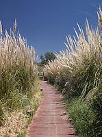 Path running up to the Explora Atacama Lodge. San Pedro de Atacama, Chile