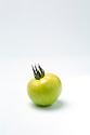 WA11126-00...WASHINGTON - Green tomato.