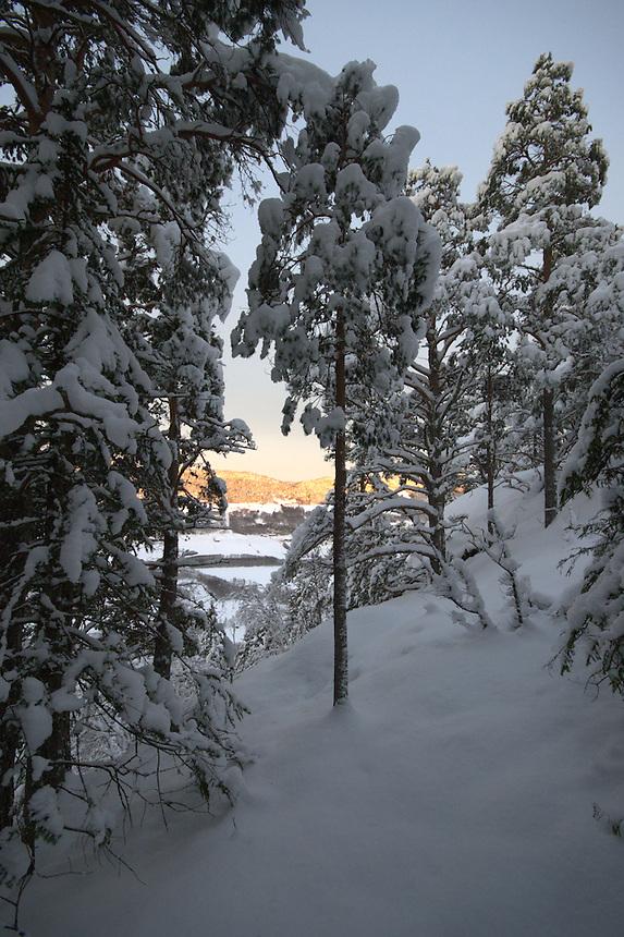 Winter forest,Gauldalen,Norway Landscape, landskap,