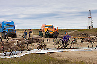 Bovanenkovo ,Yamal Peninsula, Russia, 09/07/2010..Gazprom workers watch while Nenets sledges and reindeer use insulation material to cross a new Gazprom built road while heading north to the Russian Arctic coast. The Nenets had previously been unable to follow their traditional migration routes because new roads constructed by Gazprom damage the sledges..