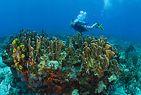 Underwater at French Cap Cay .US Virgin Islands