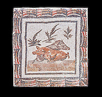 3rd century Roman mosaic panel of a boar and a sow lying down. From Thysdrus (El Jem), Tunisia.  The Bardo Museum, Tunis, Tunisia. Black background
