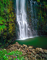 "Papa'aloa  Wailele: Colorful impatiens flowers cling to the sheer rock walls of a waterfall in Papa'aloa Mauka, Big Island. Shot on 4x5"" transparency film, available only as a fine art print."