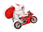 Humorous Christmas concept of a white cat doing a wheelie on a red sports motorcycle, wearing a Santa hat and carrying a large bag of presents isolated on white background