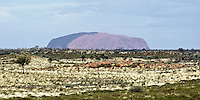 Uluru/Ayers Rock in the early afternoon, seen from some considerable distance across the Australian savanna