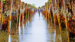Old pilings, Astoria, Oregon, USA<br />