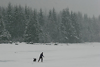 Morning snow blankets a cross country skier and his dog on the frozen Mendenhall Lake in Juneau.