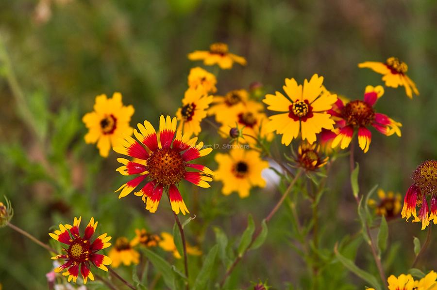 Texas Flora and Fauna