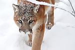Calgary Zoo. Mandatory Credit: Sergei Belski