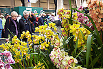 McBean's Orchids stand at the RHS Orchid and Botanical Art Show 2013.