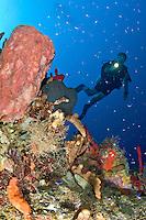 Scuba Diver  at Vertigo in Annaly Bay, St. Croix, US Virgin Islands