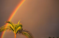 Lone palm tree with rainbow in background