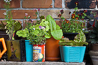 Lettuces and flowering plants in a variety of containers in an urban rooftop gardne.