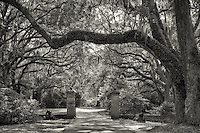 Monochrome photograph of the entrance to Charlestowne Plantation.