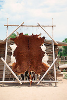 cow hide drying out on a  stretcher in Santa Fe, New Mexico