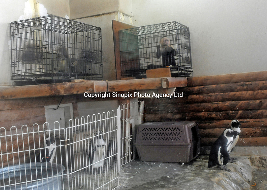 Penguins and Gibbons share a cage at the Noah Inner City Zoo, a pet shop that sells exotic animals. The Noah Inner City Zoo is a pet shop that sells exotic animals. The 'zoo' claims to have more than 300 species for sale, many of which are rare and some are even endangered.