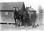 TWO TALL PERCHERONS. In a dirt alley behind a small frame house, a man proudly displays a pair of gleaming Percheron draft horses. The boy comfortably seated bareback atop one of them is probably his son. It looks like these big horses could barely fit into the tiny barn behind them. Many Lincoln houses retained carriage houses well into the 20th century, and backyards in the German-Russian North and South Bottoms neighborhoods often included tiny barns, chicken coops, and summer kitchens. Importing draft stallions from Europe was a major business in Lincoln in this era, before trucks and tractors became the major source of horsepower on farms.<br /> <br /> Photographs taken on black and white glass negatives by African American photographer(s) John Johnson and Earl McWilliams from 1910 to 1925 in Lincoln, Nebraska. Douglas Keister has 280 5x7 glass negatives taken by these photographers. Larger scans available on request.