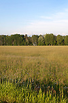 Summer landscape of the countryside and forests of Williamsburg, Michigan, near Traverse City