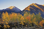 Morning Light on Mt. Hope and Twin Peaks above autumn aspens, San Isabel National Forest, Colorado