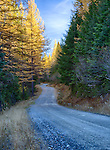 Idaho, Northern, Bonners Ferry.  Snow Creek Road in the Selkirk Mountains in autumn.