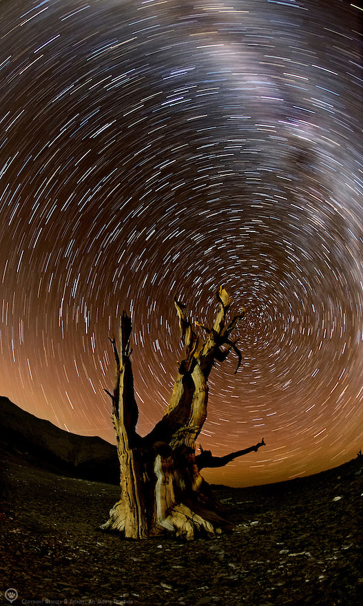 Star-trails and the milky way whirl over an ancient bristlecone pine tree in the White Mountains of California.