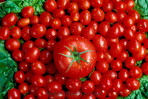 Tomato and cherry tomatoes