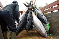 Bali Harbor,Unloading Tuna