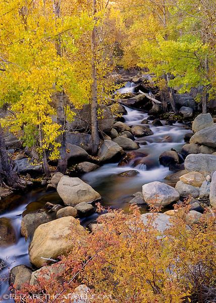 Bishop Creek in Autumn