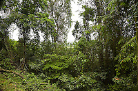 FOREST_LOCATION_90147