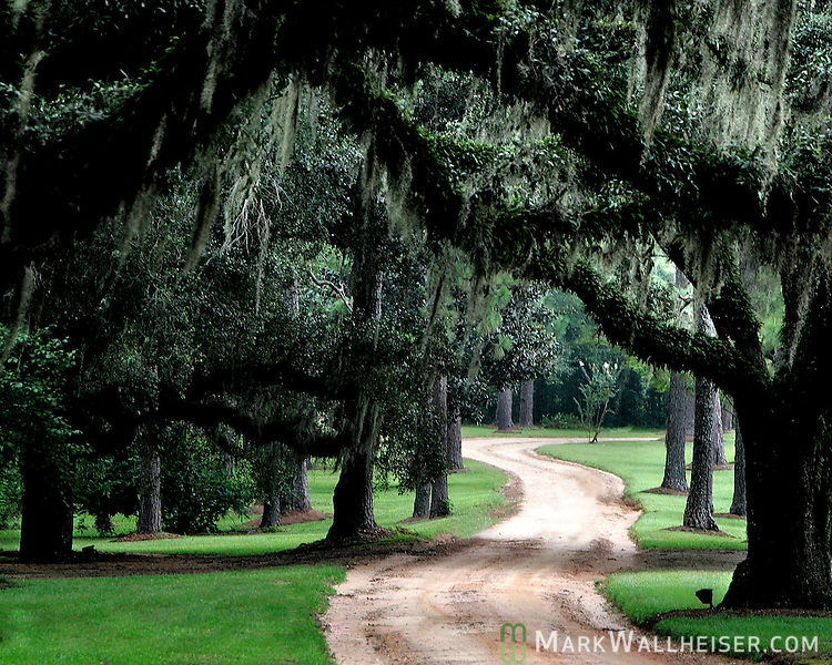 The long driveway leading up to Melhana Plantation in Thomas County, GA.