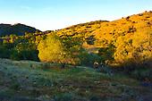 Western Morning Landscape