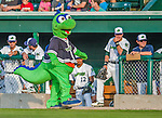 8 July 2015: Vermont Lake Monsters Mascot Champ entertains fans in front of the dugout prior to a game against the Mahoning Valley Scrappers at Centennial Field in Burlington, Vermont. The Lake Monsters defeated the Scrappers 9-4 to open the home game series of NY Penn League action. Mandatory Credit: Ed Wolfstein Photo *** RAW Image File Available ****