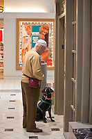 Service dog in training at the shopping mall