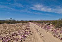Dirt road and spring flowers in Baja California