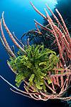 Marine sponge with crinoid