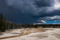 Scenes from Yellowstone National Park in Yellowstone , WY on Wednesday, June 7, 2017. (Justin Cook)
